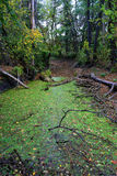 Swamp in autumn forest Royalty Free Stock Photography