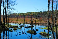 Swamp. Autumn at a swamp in New England Royalty Free Stock Photos