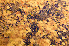 Swamp in autumn, top view Stock Images