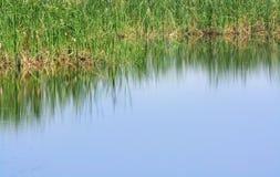 Swamp background Stock Image