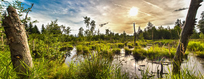 Swamp. A beautiful picture of a swamp in austria Royalty Free Stock Images