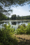 Swamp with beaver pond in New London, New Hampshire. Royalty Free Stock Photo