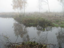 Swamp in Belarus Royalty Free Stock Images