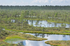 Swamp, birches, pines and blue water. Evening sunlight in bog. Reflection of marsh trees. Fen, lakes, forest. Moor in summer Royalty Free Stock Photo