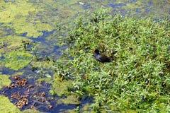 Swamp and bird Stock Image