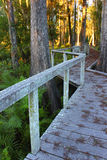 Swamp Boardwalk - Florida Royalty Free Stock Image