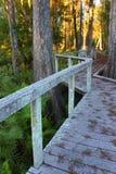 Swamp Boardwalk - Florida Royalty Free Stock Image