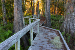 Swamp Boardwalk in Florida Royalty Free Stock Image