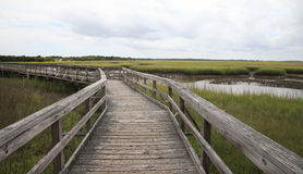 Swamp Boardwalk. Boardwalk in the middle of the swamp Royalty Free Stock Photos