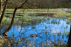Swamp, bog, marsh, mire, wetland, fen, morass, quagmire, slough, marshland. Swamp marsh mire wetland fen morass quagmire slough marshland Royalty Free Stock Photos