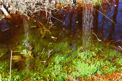 Swamp, bog, marsh, mire, wetland, fen, morass, quagmire, slough, marshland. Swamp marsh mire wetland fen morass quagmire slough marshland Stock Photos
