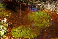 Swamp, bog, marsh, mire, wetland, fen, morass, quagmire, slough, marshland. Swamp marsh mire wetland fen morass quagmire slough marshland Stock Images
