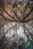 Swamp with branched tree and water in spring. Branched tree growing in a swamp with yellow flowers in spring Royalty Free Stock Photography