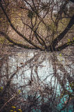 Swamp with branched tree and water in spring Royalty Free Stock Photos