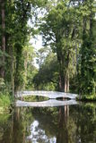 Swamp bridge Royalty Free Stock Images
