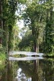 Swamp bridge. Wooden bridge at Magnolia garden in Charleston South Carolina Royalty Free Stock Images