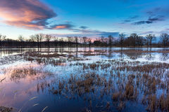 Swamp in the calm beautiful sunset. Stock Image