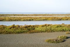 Swamp of Camargue Royalty Free Stock Image