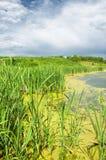 swamp Cena verde luxúria do pântano fotos de stock royalty free