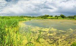 swamp Cena verde luxúria do pântano fotos de stock