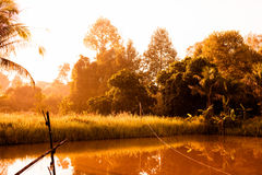 Swamp in country sun rise view stock images