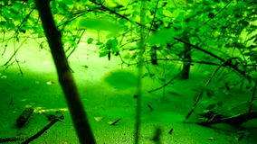Swamp covered with vegetation, pan. Swamp covered with vegetation  ,  Version 6 stock video