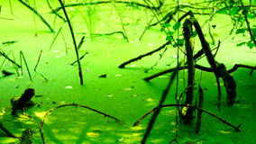 Swamp covered with vegetation, pan stock footage