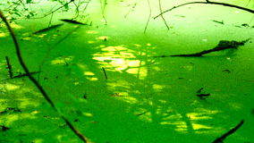 Swamp covered with vegetation, pan stock video