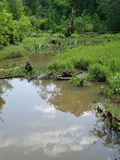 The swamp stock photos