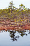 Swamp. Day in a swamp with open water Royalty Free Stock Image