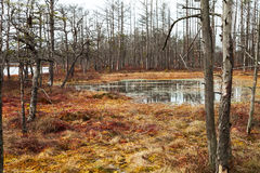 Swamp. Day in a swamp with open water Royalty Free Stock Photo