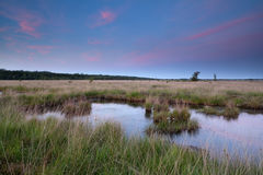 Swamp in dusk Stock Images