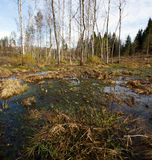 Swamp. In eastern Europe, spring time Stock Photo