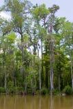 Swamp eller flodarm arkivfoto