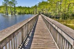 Swamp environment in Louisiana. Stock Photo