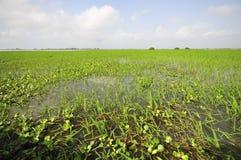 swamp för 65 ayapel Royaltyfri Bild