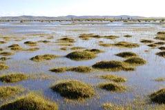 swamp för blå green Royaltyfri Bild