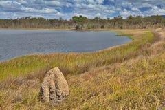 Swamp för våtmarkbillabongaustralier fotografering för bildbyråer