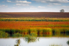 Swamp and field landscape Stock Images