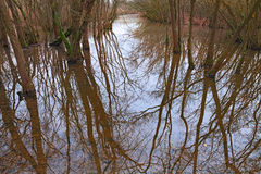 Swamp with flooded forest in Ravenna, Italy Stock Photo
