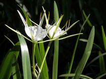 Swamp flower Stock Images