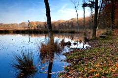 Swamp in forest Stock Image
