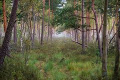 Swamp forest at early morning Royalty Free Stock Photos