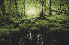 Swamp in forest with green vegetation stock photography