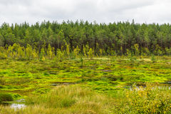 Swamp and forest Stock Image