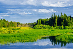 Swamp and forest Stock Photography
