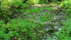 Swamp Forest stock footage