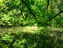 Swamp in a forest royalty free stock photos