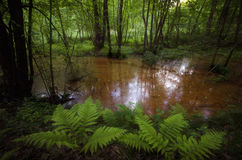 Swamp in forest with vegetation Stock Photos