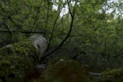 Swamp in the forest, view from the ground stock photography